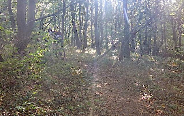 trails_3